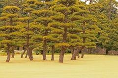 秋天庭院风景结构树 库存图片