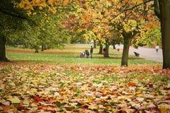 秋天庭院kensington伦敦 免版税图库摄影