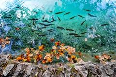 秋天开始 普利特维采湖群国家公园,达尔马提亚,克罗地亚 免版税库存照片