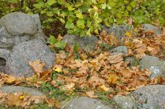 秋天开始 库存照片