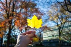 秋天开始  免版税库存图片