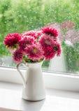 秋天开花在一个白色投手的翠菊反对窗口在一个雨天 免版税库存图片