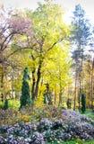 秋天开花的公园 免版税库存图片