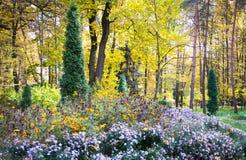 秋天开花的公园 库存照片