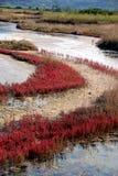 秋天微咸的颜色沼泽 免版税库存图片