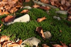 秋天微型风景 库存图片