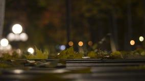 秋天心情在公园 免版税库存图片