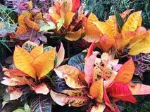 秋天心情明亮的草本颜色 库存图片