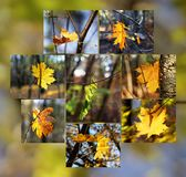 秋天心情- 8张图片拼贴画与唯一叶子的 图库摄影