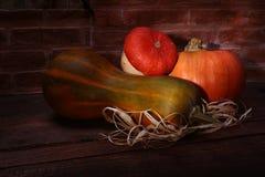 秋天感恩南瓜背景-在一个木架子的被分类的南瓜在砖背景 免版税图库摄影