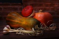 秋天感恩南瓜背景-被分类的南瓜和大蒜在一个木架子在砖背景 库存图片