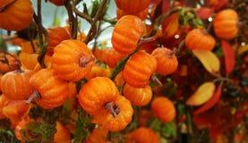 秋天感恩装饰小橙色南瓜花束 免版税库存图片