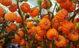 秋天感恩装饰小橙色南瓜花束 库存图片