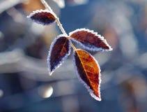 秋天或冬天? 免版税库存照片