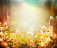 秋天或夏天弄脏了与花田和日落光的自然背景 图库摄影