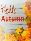 秋天或秋天边界五颜六色的丝绸叶子、pinecones、坚果和枝杈全部在土气木背景绘了蓝色 woode 图库摄影