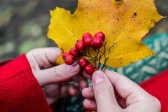 秋天手和莓果 免版税图库摄影