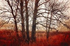 秋天报道的划分为的森林地面横向留下黄色 在有雾的天气的秋天树 免版税库存照片