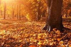 秋天报道的划分为的森林地面横向留下黄色 盖地面和森林秋天树的下落的秋叶 库存照片