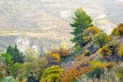 秋天报道的划分为的森林地面横向留下黄色 图库摄影