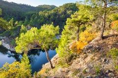 秋天报道的划分为的森林地面横向留下黄色 免版税库存图片