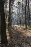 秋天报道的划分为的森林地面横向留下黄色 免版税库存照片