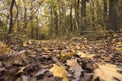 秋天报道的划分为的森林地面横向留下黄色 库存照片