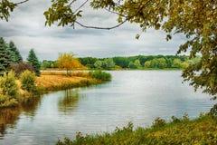 秋天报道的划分为的森林地面横向留下黄色 库存图片