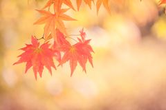 秋天抽象背景[软的焦点] 免版税图库摄影