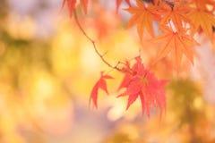 秋天抽象背景[软的焦点] 库存照片