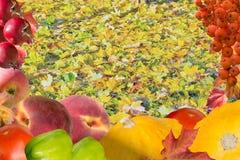 秋天拼贴画卡片用果子和叶子 免版税图库摄影