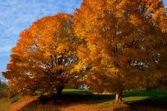 秋天挂接国家重新创建罗杰斯季节 免版税库存图片