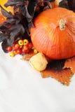 秋天排列用北海道南瓜 图库摄影