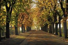 秋天排行了街道结构树 库存照片