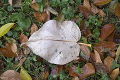秋天接近的地面图象离开 免版税库存图片