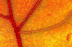 秋天接近的朦胧的叶子 免版税库存图片