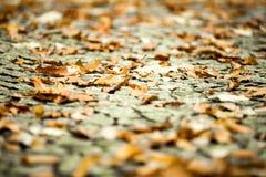 秋天接近 与浅深度的抽象秋季背景 库存照片