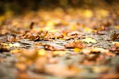 秋天接近 与浅深度的抽象秋季背景 免版税图库摄影