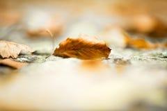 秋天接近 与浅深度的抽象秋季背景 免版税库存照片
