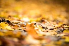 秋天接近 与浅深度的抽象秋季背景 图库摄影