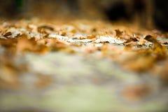 秋天接近 与浅深度的抽象秋季背景 库存图片