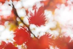 秋天摘要blured背景[软的焦点] 库存照片