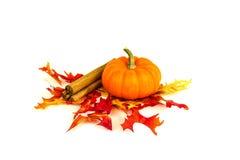 秋天收获和南瓜香料 库存图片