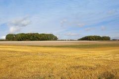 秋天收获和小灌木林 免版税库存图片