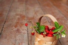 秋天收获在村庄:水多的莓果 库存照片