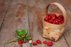 秋天收获在村庄:水多的莓果 免版税库存图片