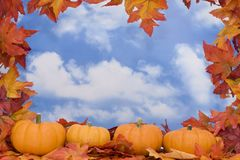 秋天收获场面 库存照片