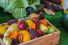 秋天收获显示印第安玉米金瓜南瓜红辣椒果子 图库摄影
