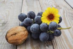 秋天收获果子葡萄 免版税库存照片