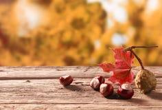 从秋天收获的新鲜的栗子 图库摄影